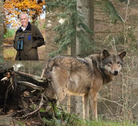 De wolf in Nederland